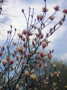 first-spring-blush