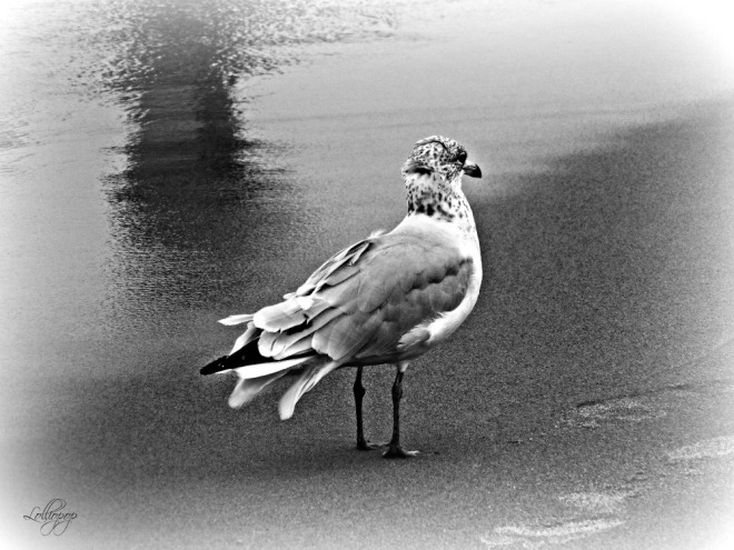 Bird on the Beach SM